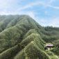 「秋憩.野聚」住房專案的旅人可選擇「抹茶山攻頂私旅」,旅人們將攀登綠意盎然的抹茶山,一窺臺灣山林的自然魅力