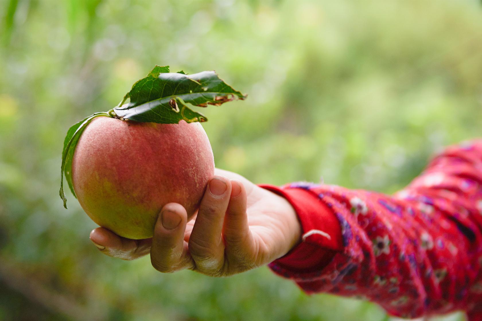 吃水果做公益|幫助孩童與小農從吃開始